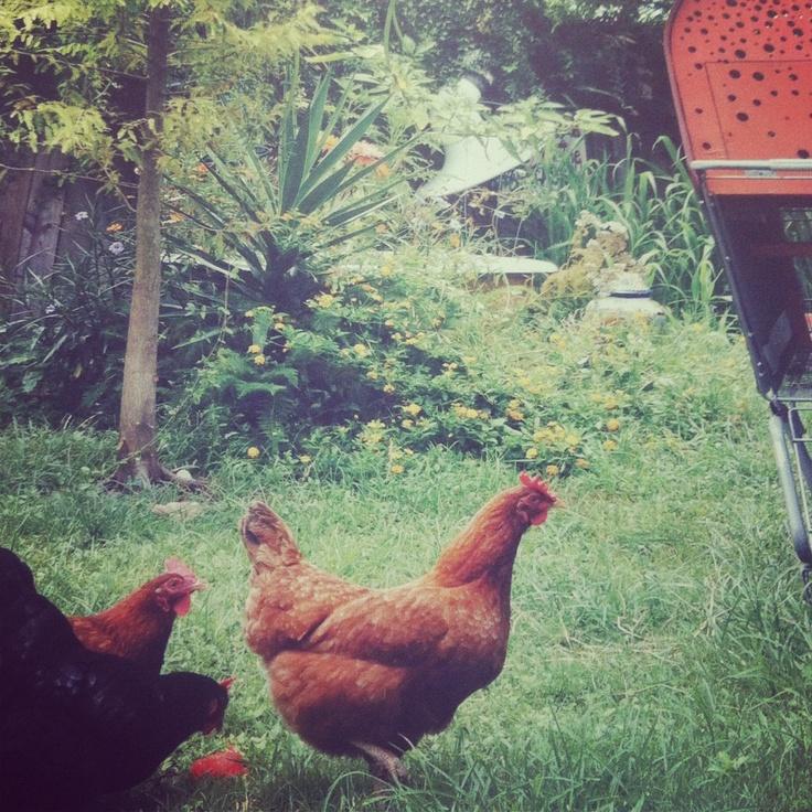 Pad Usa. Guerrilla Gardening, Food km zero, Riuso creativo in 180 progetti bottom-up #biennalearch