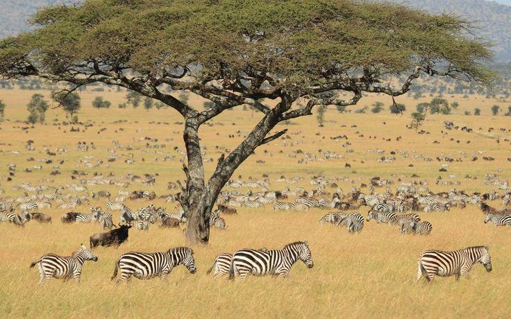 Tanzania, la magia de sabana y selvas tropicales http://www.enviajes.com/africa-2/porque-visitar-tanzania.html
