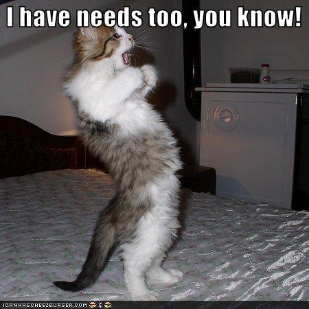 ! @Maria Cuevas: Animals, Funny Cats, Pet, Funny Stuff, Crazy Cat, Funnies, Smile, Cat Lady