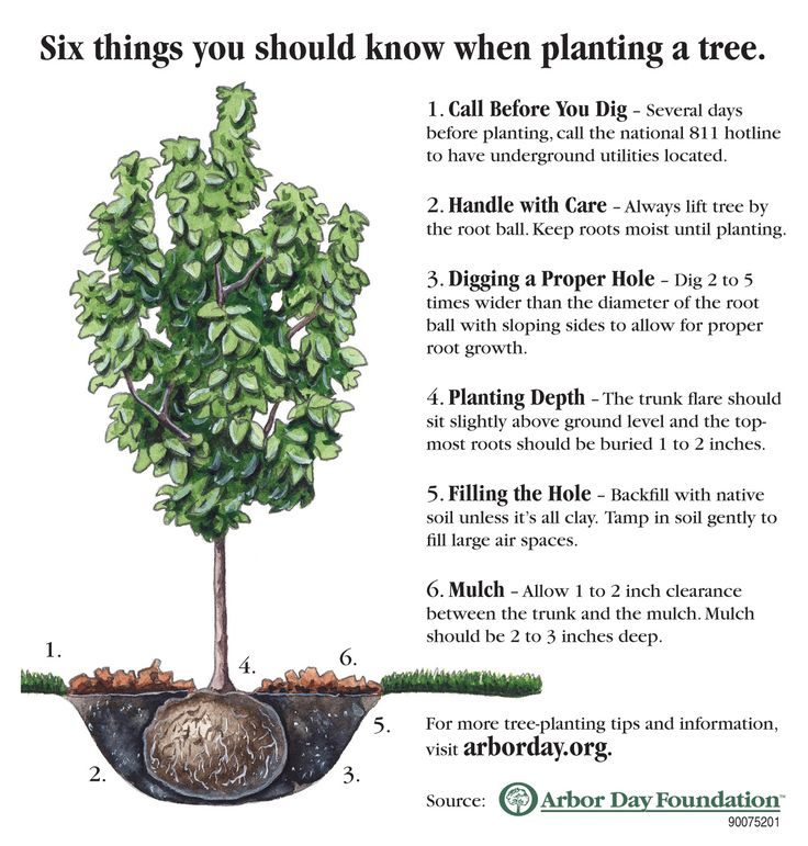 6 Things You Should Know When Planting A Tree