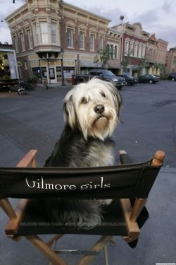 An exception to the rule....Paul Anka!!! Gilmore Girls