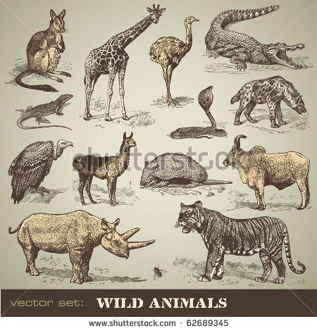 vector set: wild animals - variety of retro animal illustrations - stock vector