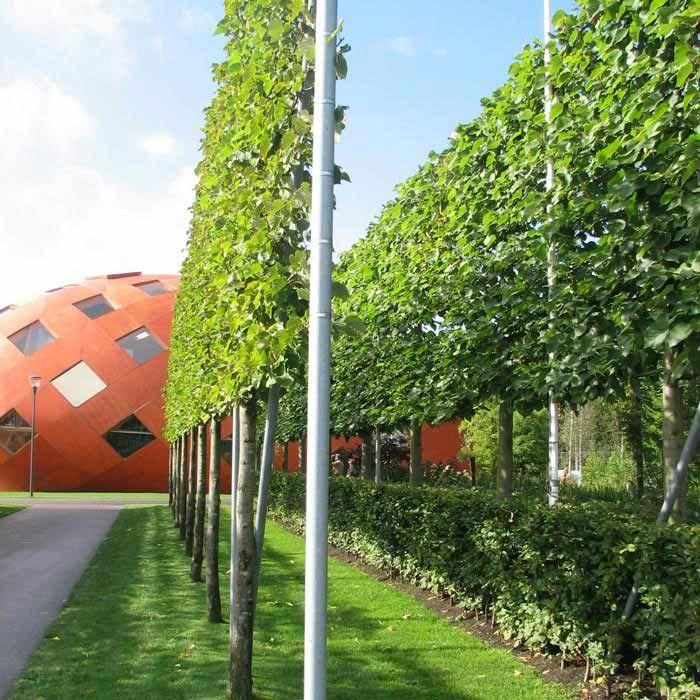Vertical Garden Ideas Australia 102 best green / taigetosz images on pinterest | landscaping