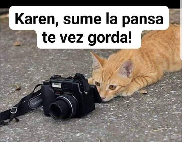 Memes De Karen Y Su Gato Memes En Espanol La Mejor Recopilacion De Memes Lo Mas Viral De Internet Memes Memes Graciosos De Animales Memes Divertidos