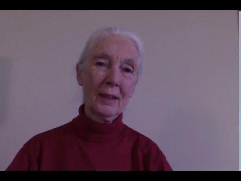 "The wonderful Jane Goodall endorses 'The Garden Awakening""!"