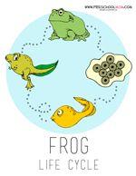 Frog Preschool Printables