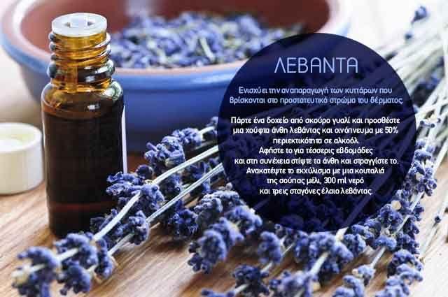 Φτιάχνουμε μόνοι μας body lotion από Λεβάντα και ενισχύουμε την αναπαραγωγή των κυττάρων του δέρματός μας.