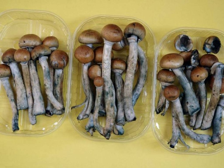"A study, at Johns Hopkins University of Medicine in Baltimore, found that a single dose of psilocybin, the active ingredient in magic mushrooms, was enough to cause positive effects for up to a year. Psilocybin can facilitate experiences that change how people... Users who had a ""mystical experience"" while taking the drug showed increases in a personality trait dubbed ""openness"", which is associated with imagination, artistic appreciation, feelings, abstract ideas and general…"