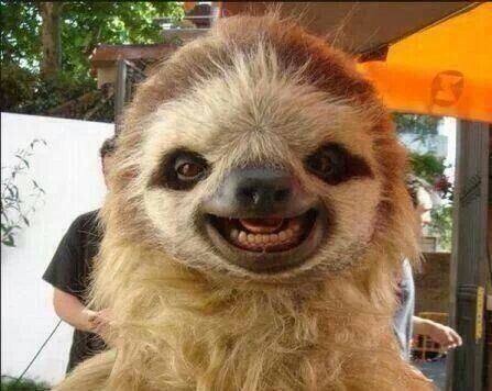 Smiling Possum Smiling sloth.
