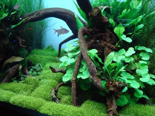 Aqua Forest An Aquarium Store Focused More On Plants Than Fish Miniature Gardening