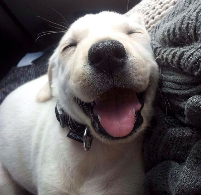 Cute smiling puppy | Smile! | Pinterest