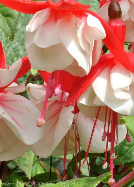 Stuck In Scared: Wordless Wednesday 15/07/2015 ... Fuchsia