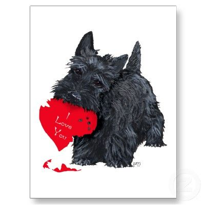 "Scottie dog and his Valentine card.  Scottish terrier Valentine's Day ""gift"" illustration."
