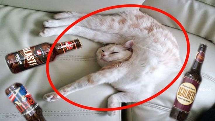 News Videos & more -  Watch the Funniest Videos on youtube - Unbelievable Drunk Cats   FUNNY Cat Videos Compilation #Funny #videos on #youtube #Music #Videos #News Check more at http://rockstarseo.ca/watch-the-funniest-videos-on-youtube-unbelievable-drunk-cats-funny-cat-videos-compilation-funny-videos-on-youtube/