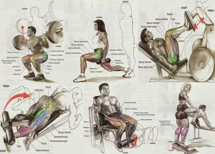 Lower Exercises For Bodybuilding All