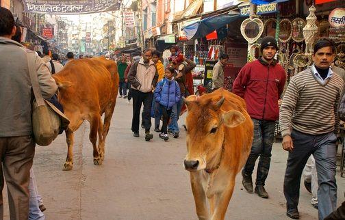 Di Negara Ini Sapi Wajib Punya KTP, Ternyata Ini Fungsinya http://malangtoday.net/wp-content/uploads/2017/01/ilustrasi-sapi-india.jpg  MALANGTODAY.NET- Kartu Tanda Penduduk alias KTP merupakan tanda pengenal yang wajib dipunyai oleh seluruh penduduk Indonesia yang sudah mencapai umur 17 tahun keatas. Namun ada yang berbeda di negara India, tidak hanya manusia yang diwajibkan mempunyai KTP, sapi pun juga harus... http://malangtoday.net/inspirasi/hiburan/lucu-sapi-di-negara-ini