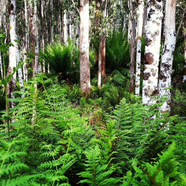 As you can see from our pictures we post. We love the Tasmanian wilderness and the remote forests.  #pointtours #tasmania #adventure #adventuretravel #adventuretrekking #travel #forest #wilderness