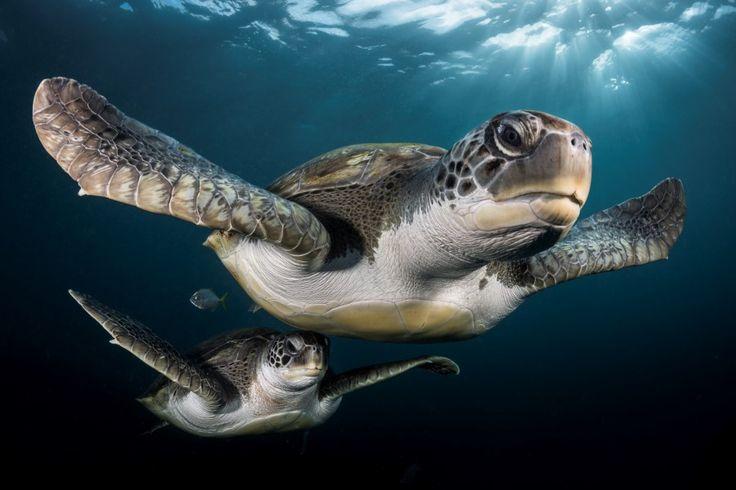 Adembenemende onderwaterfoto's: deze beelden vielen in de pr... - Het Nieuwsblad