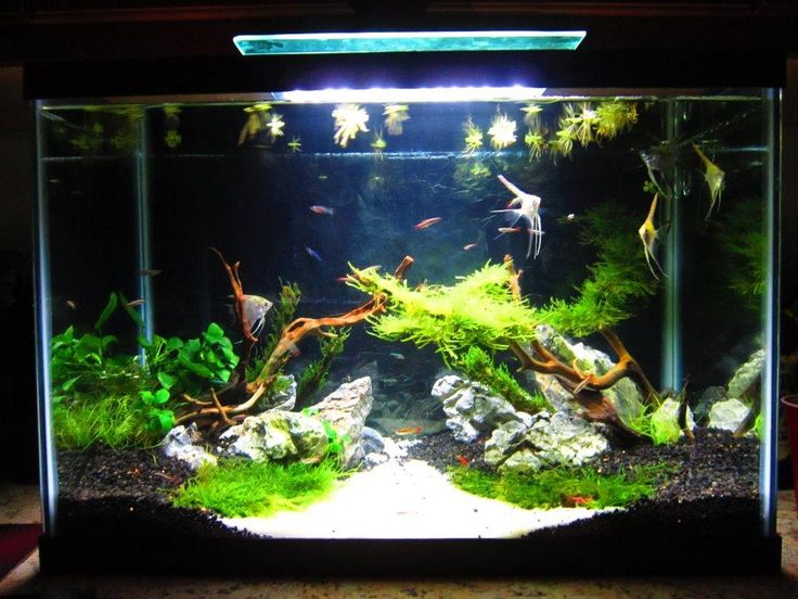 66 best images about tank inspiration on pinterest for Fish tank with plants on top