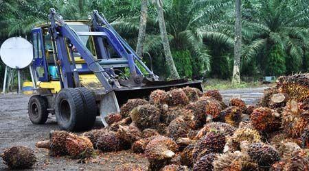rainforest- deforestation -palmoil