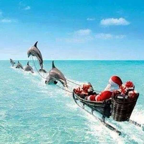 Dolphins pulling Santa's sleigh in the Florida Keys.