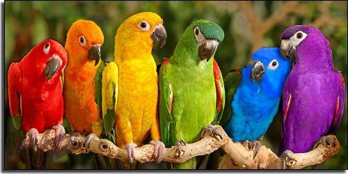 Colorful Parrots,Macaw,Conures