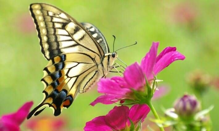 Malayalam Kavitha Butterfly On Flower Beautiful Butterflies Butterfly Pictures