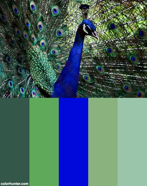 Kebun+Binatang+Bandung+Color+Scheme