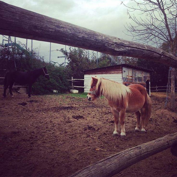 Thank you @kirukha for your lovely photo. #Pirgadikia #horses #Halkidiki #horseriding