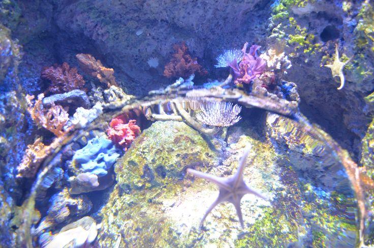 Singapore Aquarium