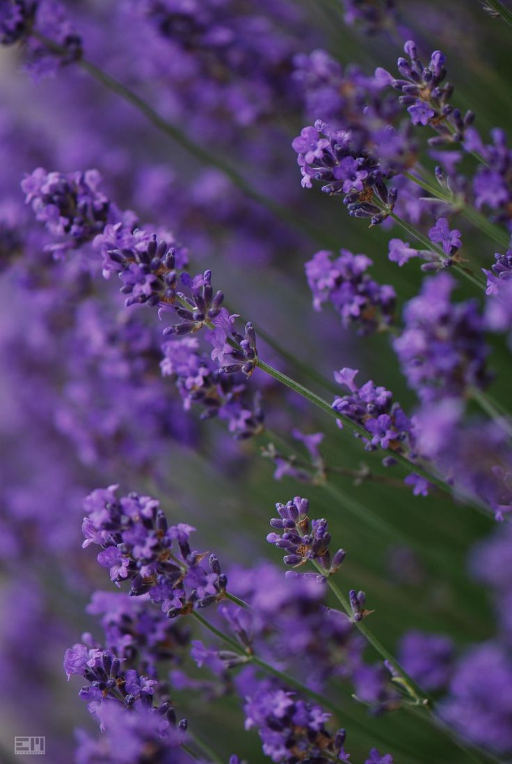 Purple by Edel Mohr on 500px