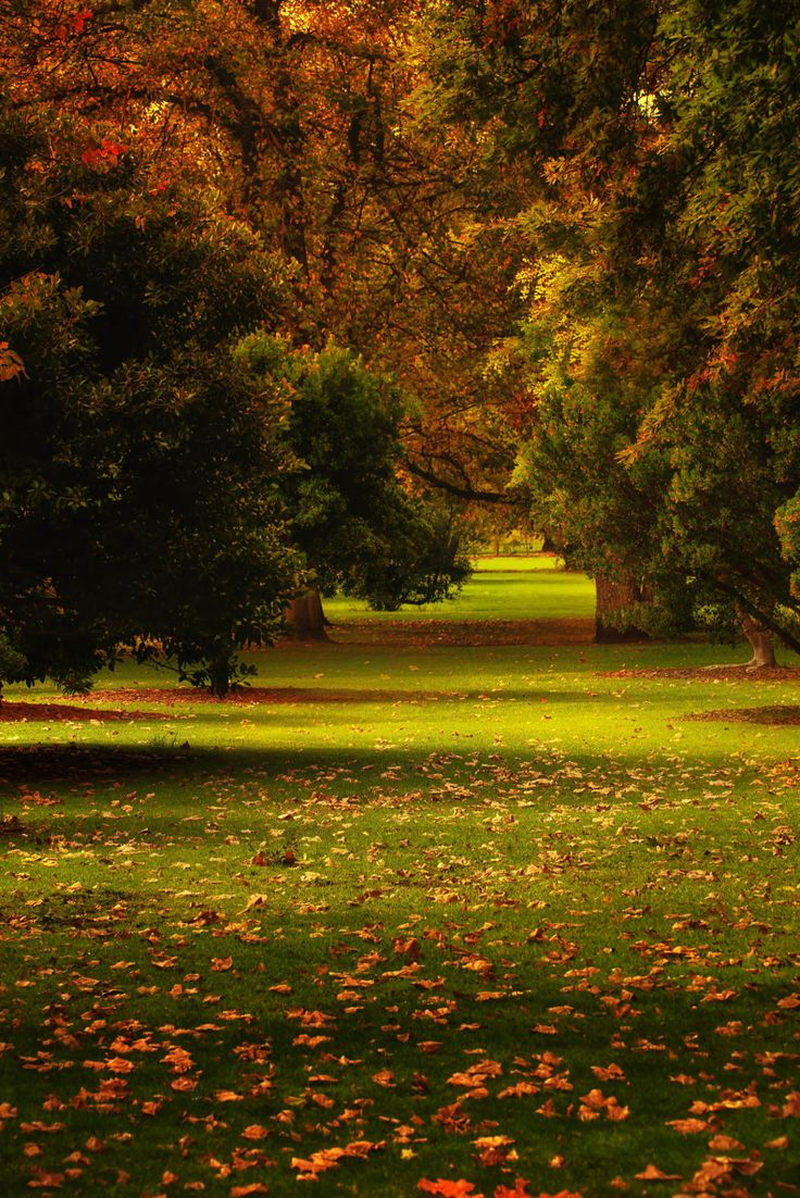 Adelaide botanic gardens at North Terrace, Adelaide, Australia by Bipphy Kath