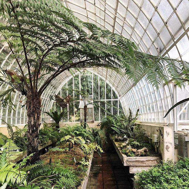 Back In The Keecie Studio In Amsterdam But In My Mind In The Botanical Garden In Valencia