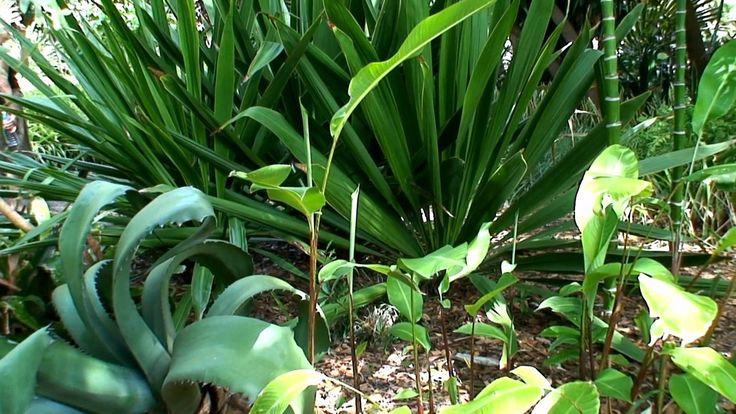 Jardin Botanico Tenerife 1080p