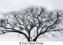 Αποτέλεσμα εικόνας για  trees WITHOUT LEAVES images