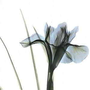 A arte da radiografia: o holandês Albert Koetsier, técnico de Raios X e fotógrafo amador    Leia mais: http://obviousmag.org/archives/2007/08/radiografia_art.html#ixzz2NlmdTnPO
