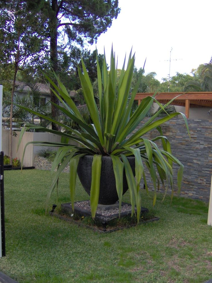 Large potted plant curb appeal pinterest for Large garden plants