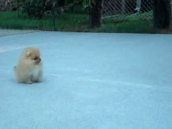 This jumping pup. | The 40 Greatest Dog GIFs Of All Time