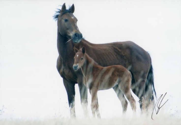 Wild Mustang Mare & Foal on a Grassy Hill.