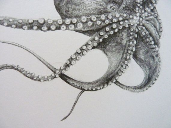 Octopus Drawing Original Graphite Art by CaughtByTheLight on Etsy