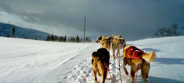 Suède : Découverte de la Laponie et des aurores boréales en chien de traineau, un voyage hors des sentiers battus proposé par Vincent, agent local en Suède