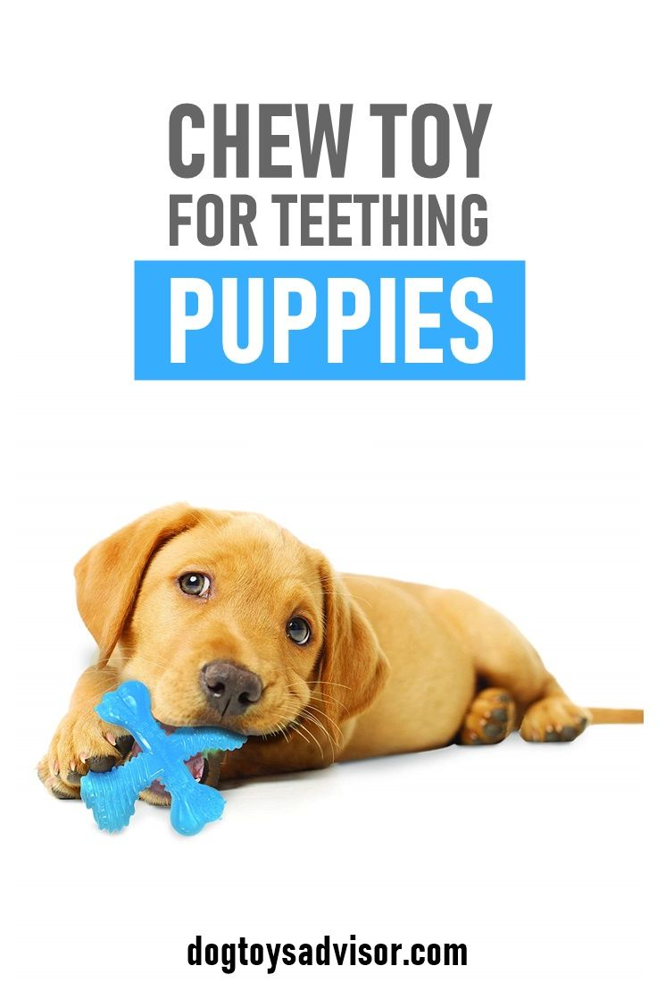 Pin By Leo Banas On Dogs Puppy Teething Dog Teething Toys Toy Puppies
