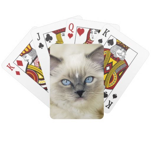 Ragdoll kitten card deck