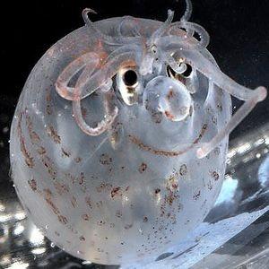 a deep-sea fish~
