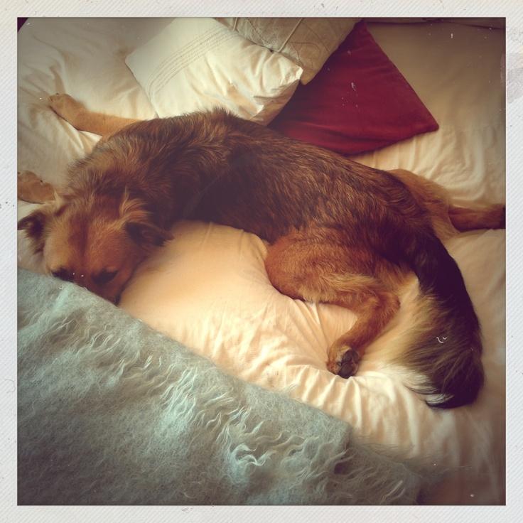 Jo-Jo enjoying my bed