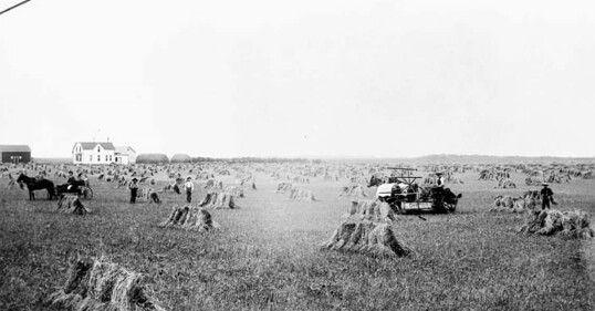 Harvest in 1899 near Portage la Prairie, Manitoba