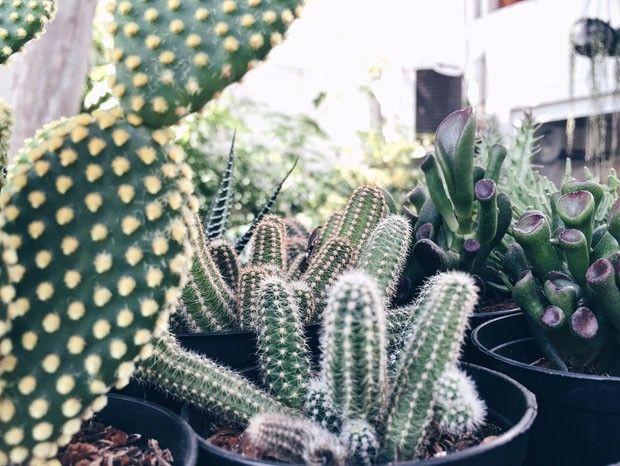 Cuidados com as suculentas  (Foto: Flo Atelier Botânico )
