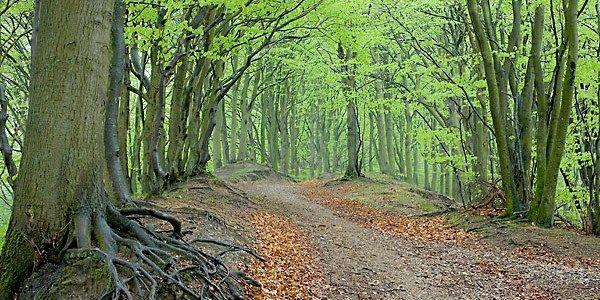 Skove - Oplev Vejle.  Vejle Kommune har mange værdifulde skovområder.  Vi har kystskove langs Vejle Fjord, unikke egekrat i Tinnet Krat og skovene på de stejle skrænter i Grejs og Højen Ådal. Skovene er et vigtigt levested for en lang række af dyr og planter lige fra rådyr og grævling til sjældne arter af fugle, insekter, planter og svampe.  Vejle Kommune ejer fem store skove:     Nørreskoven nord for Vejle By,     Sønderskoven syd for Vejle by,     Munkebjerg skov sydøst for Vejle by…