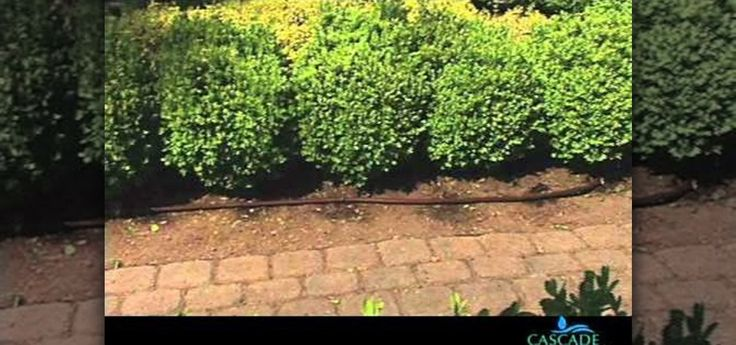 How to Install a drip irrigation system using your existing traditional sprinklers great video explanation that takes the fear out.