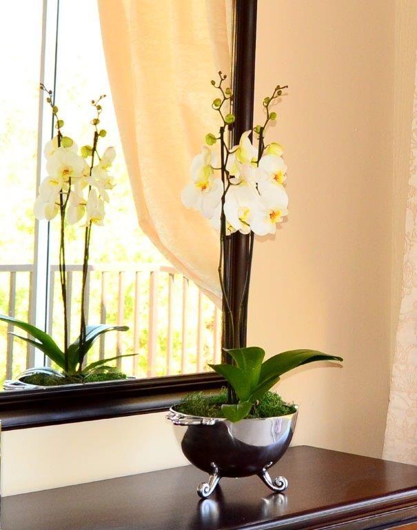 orchid in carrol boyes vase